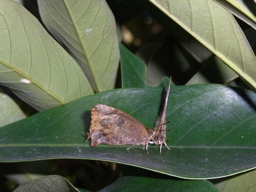 ムラサキツバメ越冬集団(大庭城趾公園E)